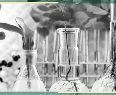Career Prospects in Environmental Biotechnology