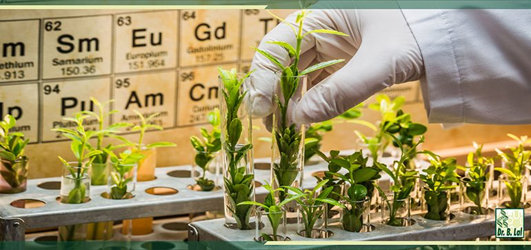 Sequencing Plant Genomes